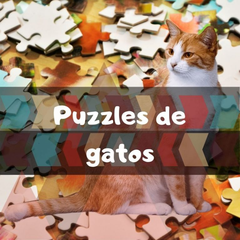 Los mejores puzzles de gatos