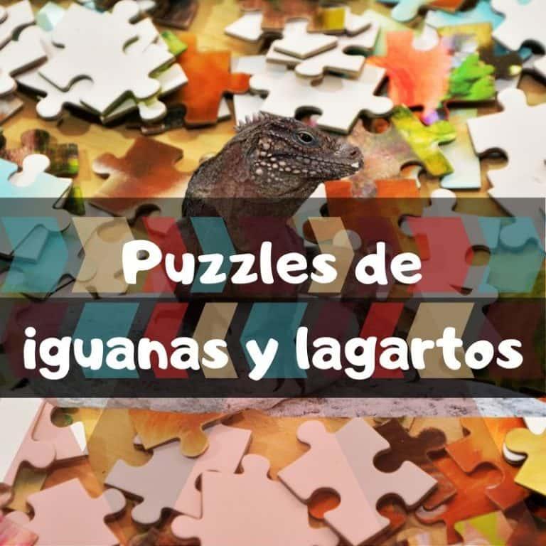 Lee más sobre el artículo Los mejores puzzles de iguanas y lagartos