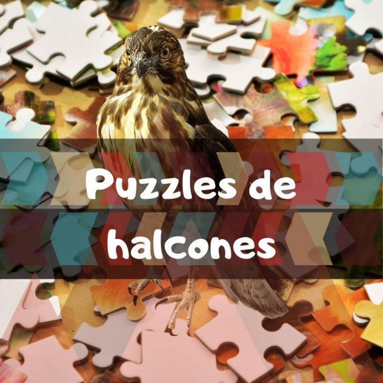Los mejores puzzles de halcones