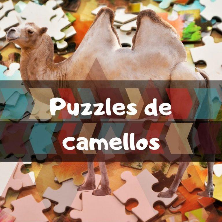 Los mejores puzzles de camellos