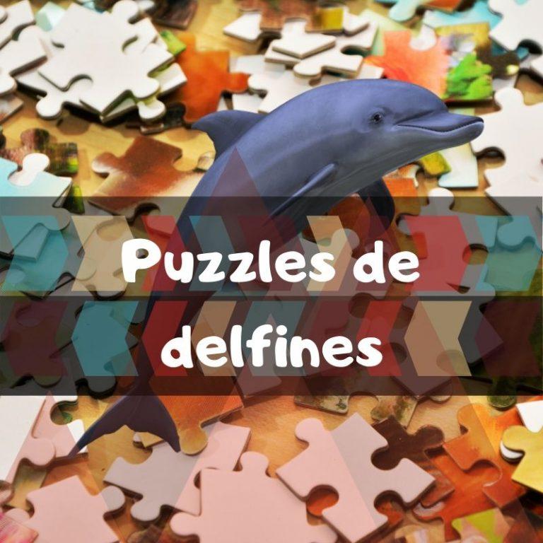 Los mejores puzzles de delfines