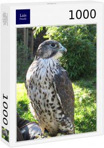 Los mejores puzzles de halcones - Puzzle de 1000 piezas de halcón