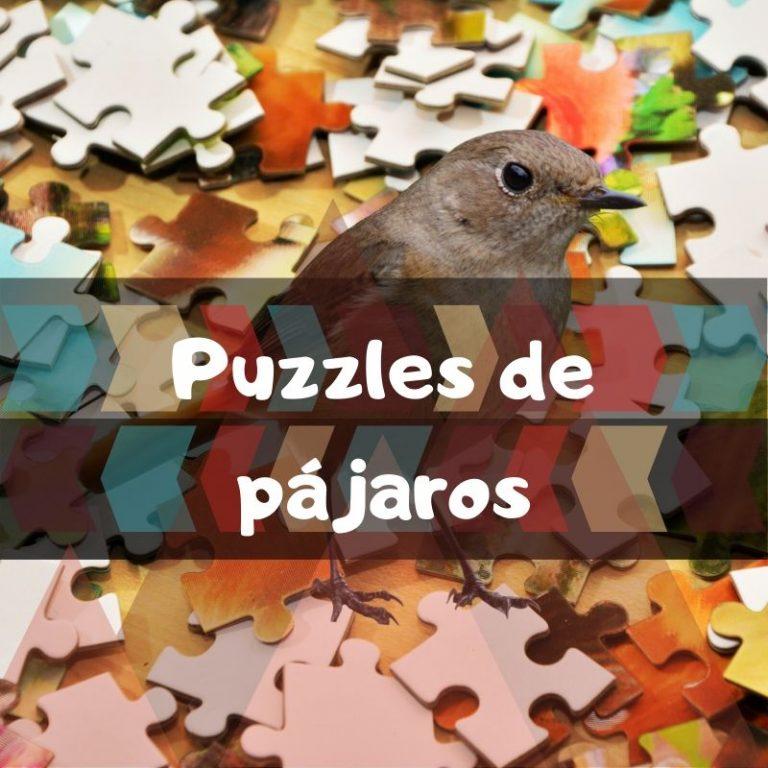 Los mejores puzzles de pájaros