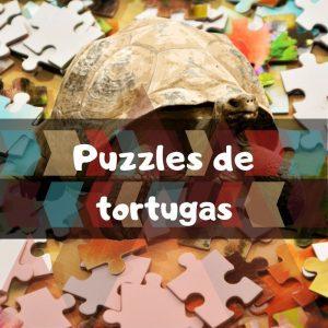 Los mejores puzzles de tortugas