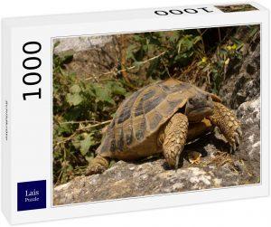 Los mejores puzzles de tortugas - Puzzle de 1000 piezas de tortuga sobre una piedra