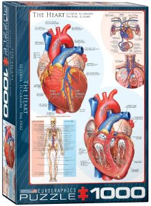 Los mejores puzzles de corazón - Puzzle de corazón del cuerpo humano de 1000 piezas de Eurographics