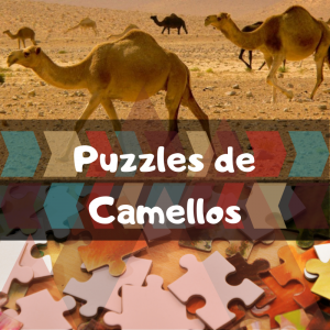 Los mejores puzzles de animales salvajes - Puzzles de camellos - Comprar puzzle de camello