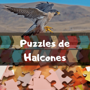 Los mejores puzzles de animales salvajes - Puzzles de halcones - Comprar puzzle de halcón