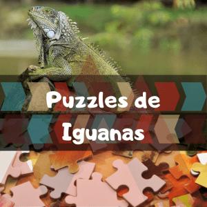 Los mejores puzzles de animales salvajes - Puzzles de iguanas - Comprar puzzle de iguana