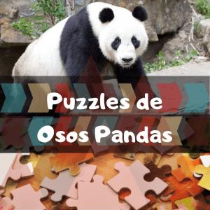Los mejores puzzles de animales salvajes - Puzzles de osos pandas - Comprar puzzle de oso panda