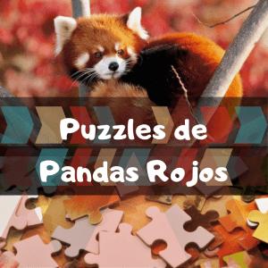 Los mejores puzzles de animales salvajes - Puzzles de pandas rojos - Comprar puzzle de panda rojo