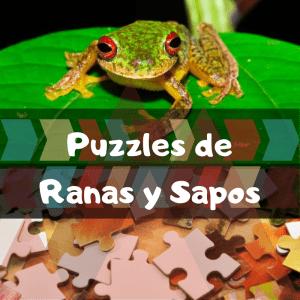 Los mejores puzzles de animales salvajes - Puzzles de ranas y sapos - Comprar puzzle de rana